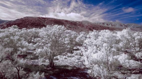 Australia, Flinders Ranges, Infrared, Landscape, Merna Mora Station, Nature, Parachilna, Photography, South Australia, Travel