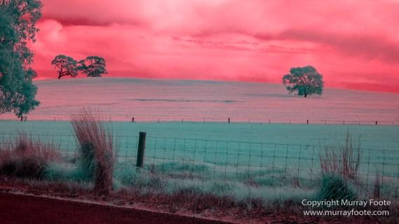Australia, Flinders Ranges, Infrared, Landscape, Merna Mora Station, Nature, Photography, South Australia, Travel