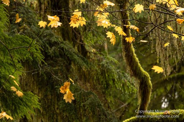Architecture, Lake Quinault, Landscape, Nature, Photography, Rainforest, Ruby Beach, Travel, USA, Washington, Waterfall, Wilderness, Wildlife