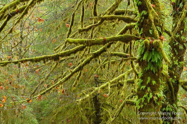 Hoh Rain Forest, La Push, Landscape, Nature, Photography, Rainforest, Rialto Beach, seascape, Travel, USA, Washington, Wilderness