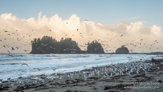 La Push, Landscape, Mt Walker Viewpoint, Nature, Photography, seascape, Travel, USA, Washington, Wilderness, Wildlife
