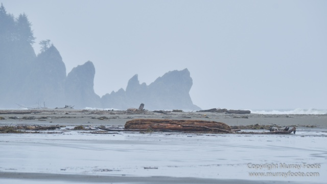 La Push, Landscape, Macro, Nature, Photography, seascape, Second Beach, Travel, USA, Washington, Wilderness, Wildlife
