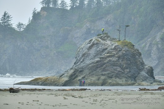 La Push, Landscape, Macro, Nature, Photography, seascape, Second Beach, Travel, USA, Washington, Wilderness, Wildlife