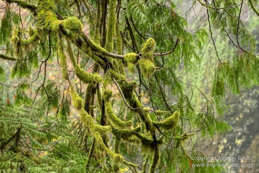 Landscape, Nature, Oregon, Photography, Rainforest, seascape, Travel, USA, Waterfall, Wilderness