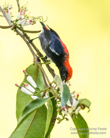 Birds, Butterfly, Giant red flying squirrel, Insects, Landscape, Nature, Photography, Sabah, Scarlet-backed flowerpecker, Travel, Wilderness, Wildlife