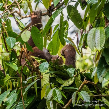 Birds, Butterfly, Insects, Island Palm Civet, Landscape, Nature, Orang Utan, Photography, Plantain Squirrel, Sabah, Sun Bear, Tarsier, Travel, Wilderness, Wildlife