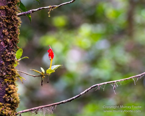 Birds, Butterfly, Funghi, Gecko, Insects, Landscape, Moth, Mount Kinabalu, Nature, Orchids, Photography, Sabah, Travel, Wilderness, Wildlife