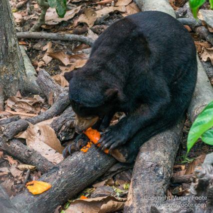 Birds, Butterfly, Insects, Island Palm Civet, Landscape, Nature, Orang Utan, Photography, Plantain Squirrel, Sabah, Sun Bear, Tarsier, Travel, Wilderness, Wildlife