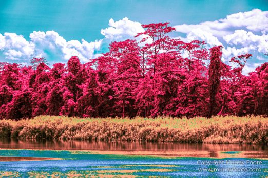 Birds, Egrets, Hornbill, Infrared, Kinabatangan River, Kingfisher, Landscape, Nature, Photography, Proboscis Monkey, Sabah, Travel, Wilderness, Wildlife