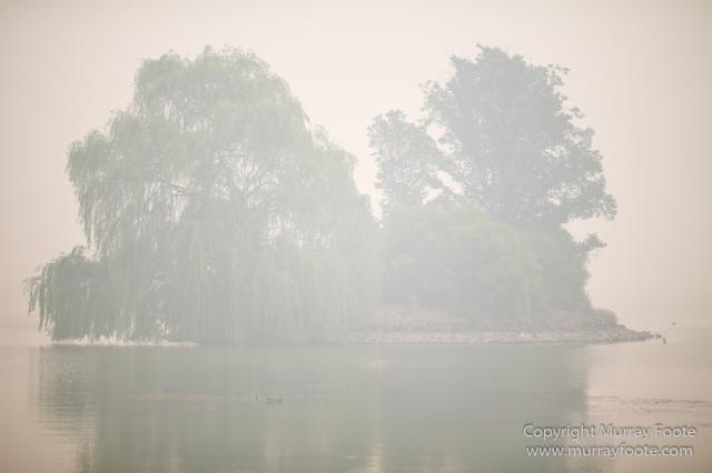 Australia, Birds, Canberra, Crimson Rosella, Cunningham's Skink, Echidna, Fires, Kangaroos, Landscape, Nature, Photography, Shingleback, Smoke, Travel, Wildlife