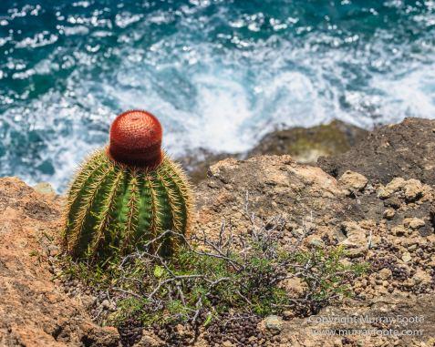 Antigua, Architecture, English Harbour, Fish, Landscape, Nature, Photography, Street photography, Travel, Wildlife