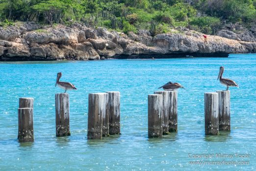 Appleton Estate Rum, Architecture, Jamaica, Landscape, Nature, Pelicans, Photography, seascape, Street photography, Travel, Treasure Beach, Wildlife