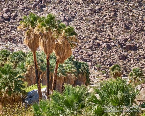 Borrego Palm Canyon, Desert, Landscape, Nature, Photography, Salton Sea, Travel, Wilderness, Wildlife