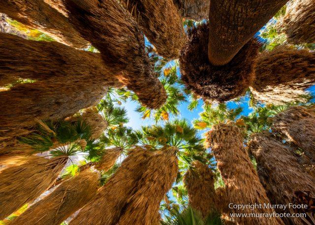 Borrego Palm Canyon, Desert, Landscape, Nature, Photography, Salton Sea, Travel, Wilderness, Wildlife
