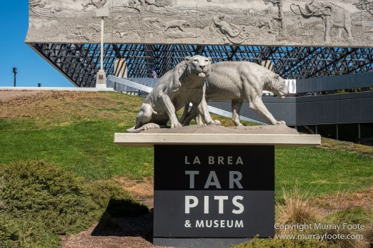 Archaeology, History, La Brea Tar Pits, Los Angeles, Photography, Travel
