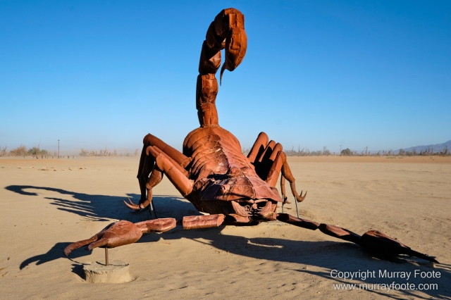 Desert, Galleta Meadows, Landscape, Megafauna, Nature, Photography, Salton Sea, Sculpture, Travel, Wilderness, Wildlife