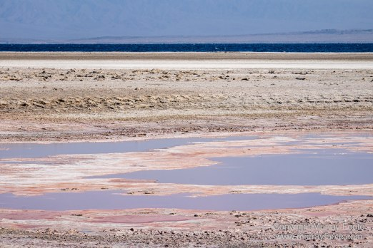 Desert, Ecology, History, Irrigation, Landscape, Nature, Photography, Salton Sea, Travel, Wilderness, Wildlife