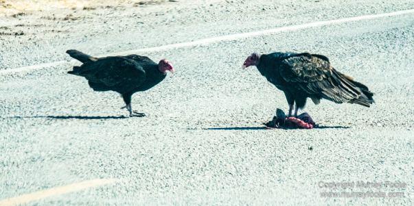 Birds, Desert, Landscape, Nature, Photography, Salton Sea, Travel, Wildlife