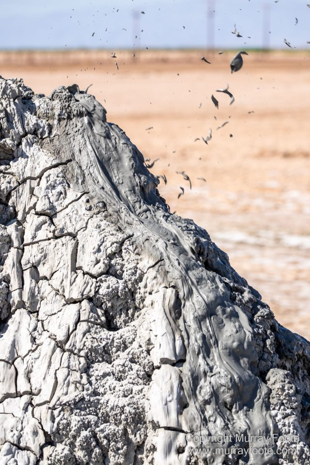 Birds, Desert, Landscape, Nature, Photography, Salton Sea, Travel, Wildlife