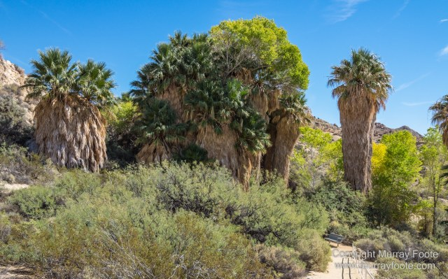 Cholla, Cottonwood Spring, Desert, Irrigation, Joshua Tree National Park, Landscape, Nature, Photography, Salton Sea, Travel