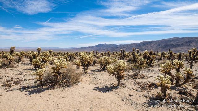 Cholla, Cottonwood Spring, Desert, Irrigation, Joshua Tree National Park, Landscape, Nature, Photography, Salton Sea, Travel