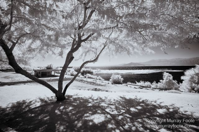 Art, Black and White, Ecology, Infrared, Landscape, Monochrome, Nature, Photography, Salton Sea, Sculpture, Slab City, Travel, Wildlife
