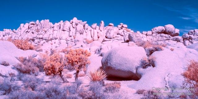 Cholla, Cottonwood Spring, Desert, Hidden Valley, Infrared, Joshua Tree National Park, Jumbo Rocks, Landscape, Nature, Photography, Travel, Wilderness