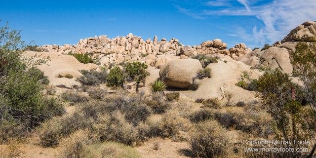 Desert, Hidden Valley, Joshua Tree National Park, Jumbo Rocks, Landscape, Nature, Photography, Travel, Wilderness, Wildlife