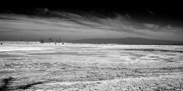 Art, Black and White, Infrared, Landscape, Los Angeles, Los Angeles County Museum of Art, Monochrome, Nature, Photography, Salton Sea, Sculpture, Travel, Wilderness