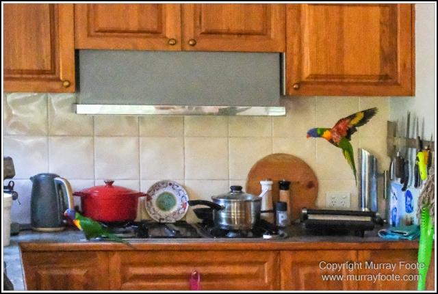 Australia, Brisbane, Butcher Bird, Kookaburras, Landscape, Magpie, Nature, Photography, Queensland, Rainbow Lorikeets, Travel, Wildlife
