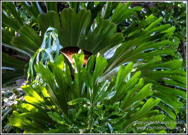 Infrared, Landscape, Mount Tambourine, Nature, Photography, Rainforest, Skywalk, Travel, Wilderness, Wildlife