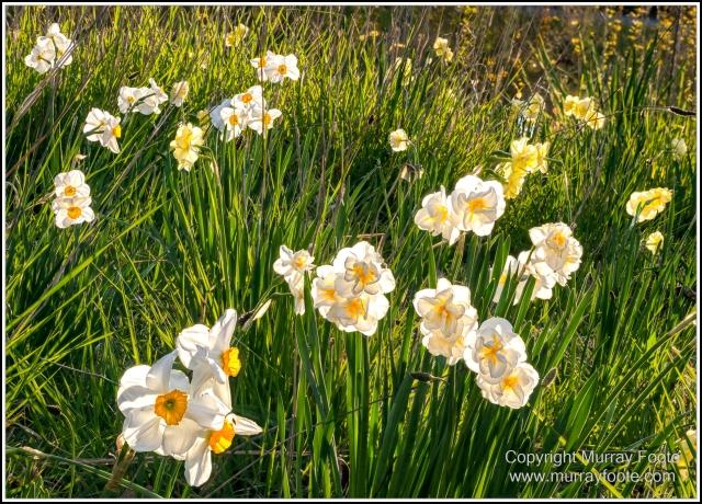 Australia, Canberra, Floriade, Flowers, Focus stacking, Landscape, Macro, Nature, Photography, Travel, Wildlife