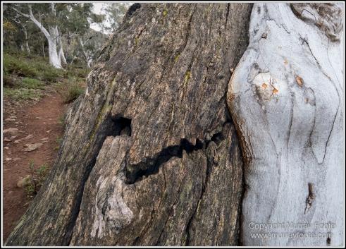 Australia, Canberra, Focus stacking, Landscape, Macro, Nature, Photography, Travel, Wildlife